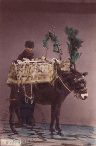 Neapolitan man with donkey