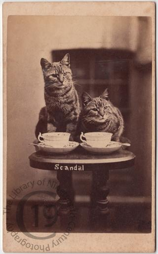 Henry Pointer's cats