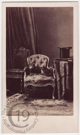 A dog on an armchair