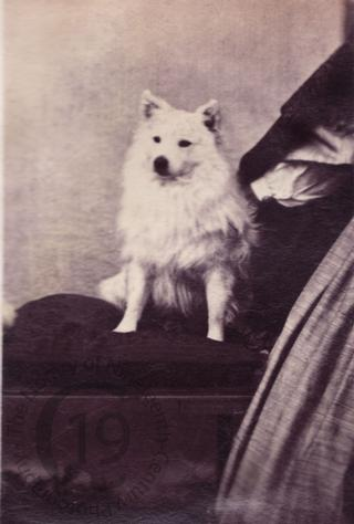 Unidentified dog
