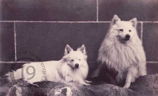 'Dogs at Balnamoon'