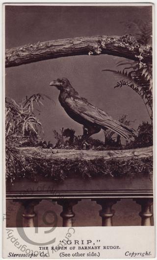 'Grip the Raven'