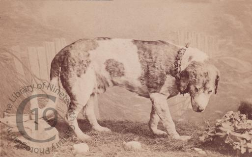 Barry (1800-1814)